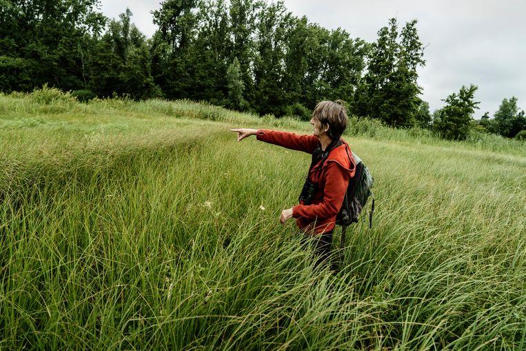 Op stap met bioloog Wouter Van Landuyt in de Damvallei. Beeld Eric de Mildt