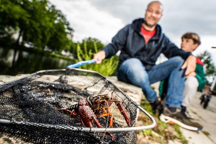 Bram Derix uit Presikhaaf heeft net een rode Amerikaanse rivierkreeft gevangen samen met zijn zoon.
