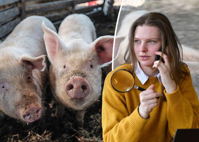 Is Nederland de grootste exporteur van varkensvlees ter wereld?