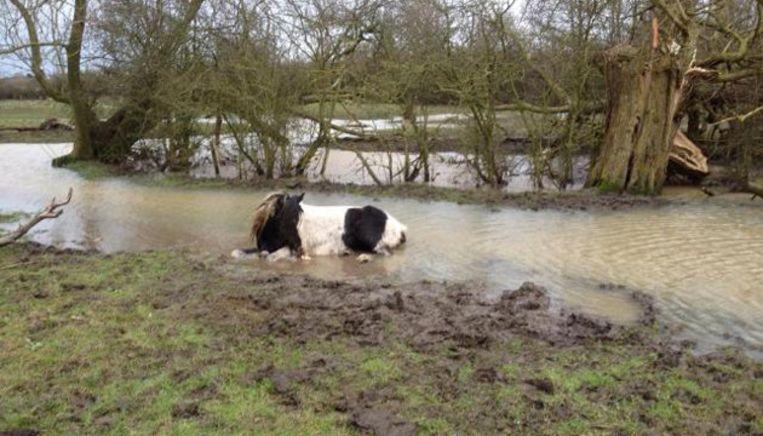 Het reddeloos verloren paard in Fosse Park bij Leicester in Midden-Engeland. Beeld Facebook