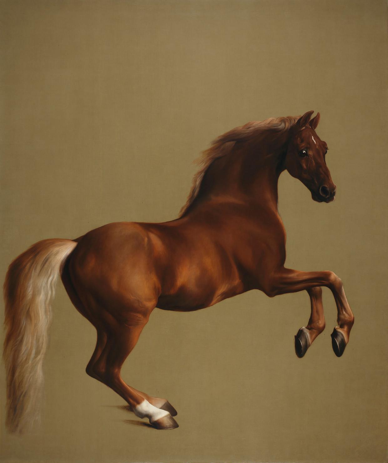 Stubbs schilderde ook racepaard Whistlejacket. Het doek is een publiekslieveling in The National Gallery.