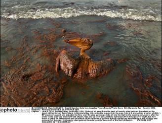 """""""Grove nalatigheid en wangedrag BP aan basis ramp Deepwater Horizon"""""""