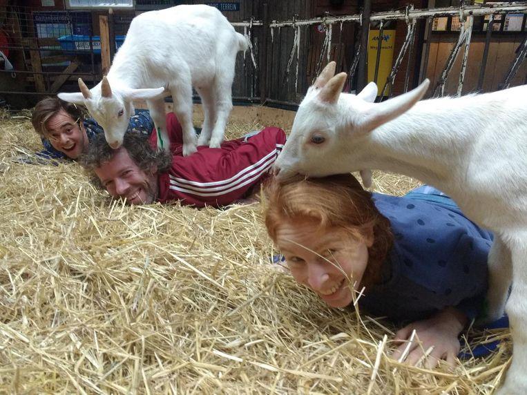 Ontspannend: de geiten geven ondertussen ook een hoofdmassage. Beeld Brenda Bood