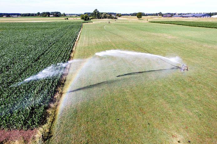 Het is extreem droog in Nederland, vooral in het oosten. Overal in de regio staan sproeiers aan om de gewassen, zoals mais, niet te veel te laten verdorren.