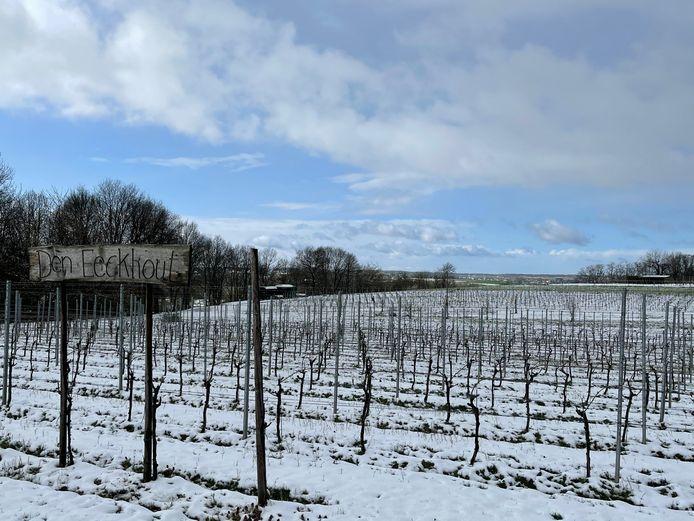 Ook de wijngaard van Joris Eeckhout lag bedolven onder een laag sneeuw maar de wijnboer denkt dat de schade mee valt.