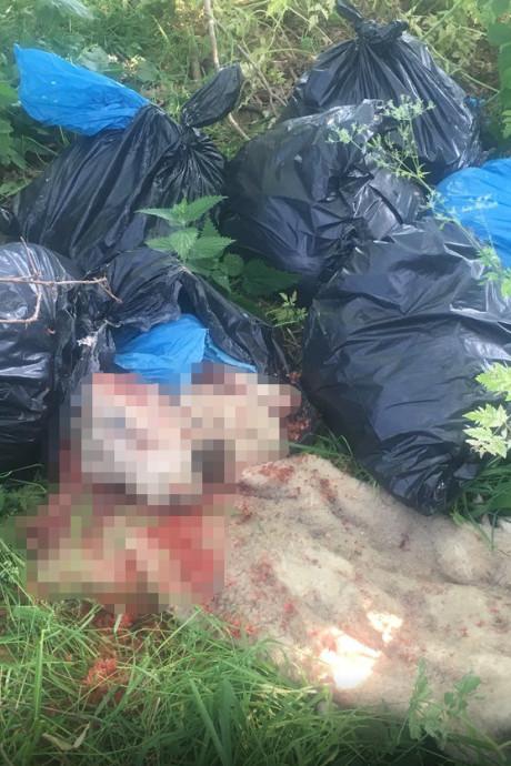 Boswachter doet akelige vondst: gedumpt afval van vermoedelijk 'gejatte schapen'