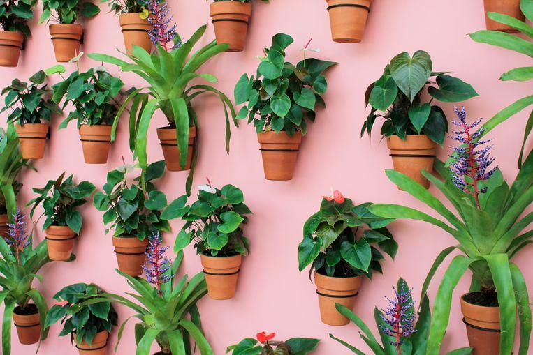 Planten water geven tijdens je vakantie doe je zo Beeld Shutterstock