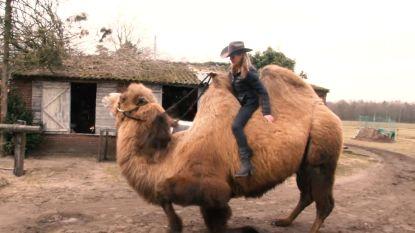 """Vlaams koppel gaat niet te paard, maar te kameel: """"Hij was te koppig voor het circus, maar ideaal om mee te draven"""""""