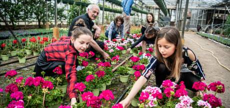 Duizenden plantjes voor de kinderboerderij in Wamel