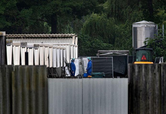 Ruiming van het nertsenbedrijf in Deurne.