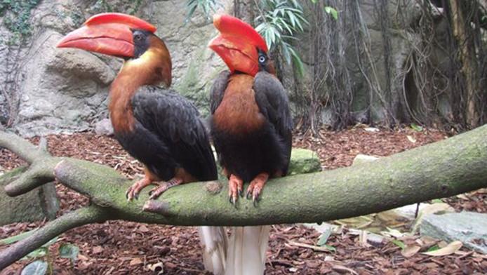Twee van de gestolen vogels uit Avifauna.