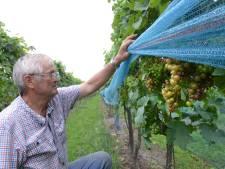 Wijnboer Van Stokkom uit Made houdt identiteit opvolger onder kurk