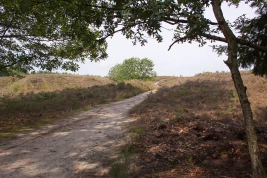 Landgoed Petrea in Wapenveld is een van de plekken waar Hoog Over Wezep mensen naartoe wil dirigeren.