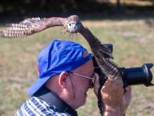 Roofvogels scheren over het publiek in Harskamp
