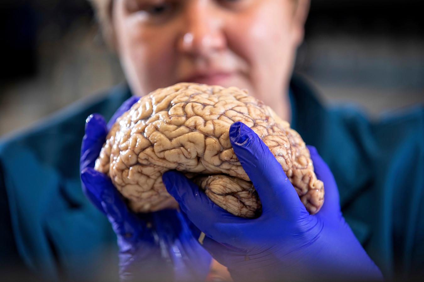 Een wetenschapster met een echt brein.