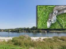 Politie achterhaalt eigenaar van verdronken hond met vastgebonden poten in Zwolle