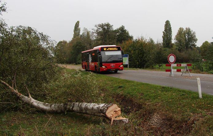 Recent is door de provincie gekapt langs de N315 tussen Rietmolen en Neede, maar in Berkelland wordt nu nog veel meer aan bomen geveld, constateert raadslid Hans Pelle.