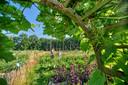 De voedseltuin van het ecodorp.