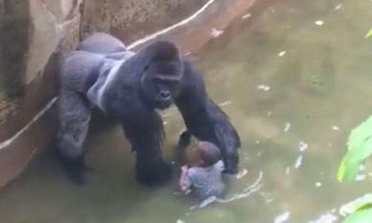 gorilla-kleuter_libelle