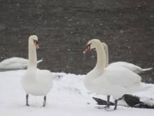 IN BEELD: Daar is de sneeuw: Brugge kleurt wit