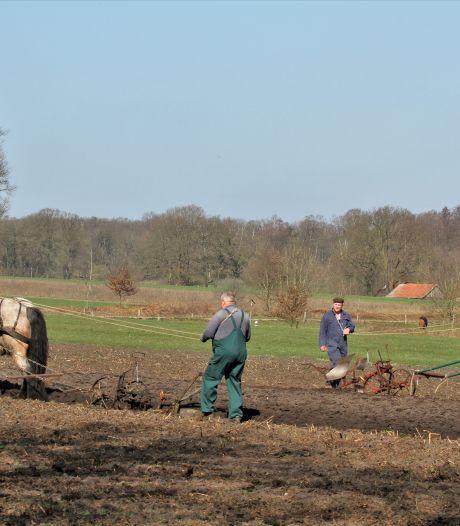 Nostalgisch land bewerken als eerbetoon aan oud ambacht in Hezingen: 'Mijn vader ploegde vroeger op dezelfde manier'
