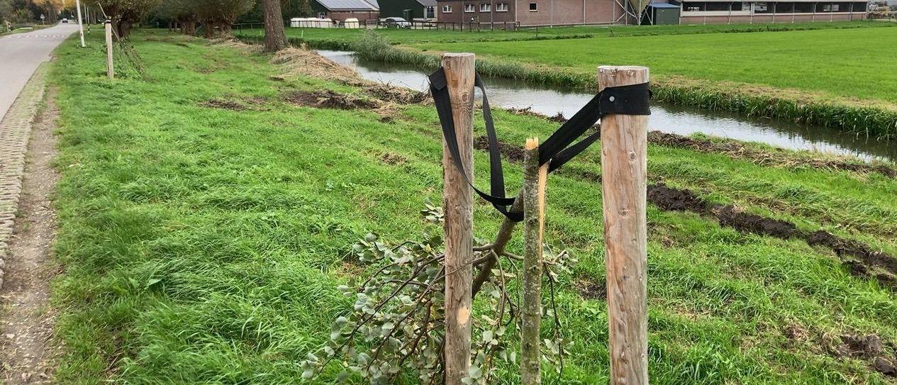 De geknakte boompjes in Leerdam.