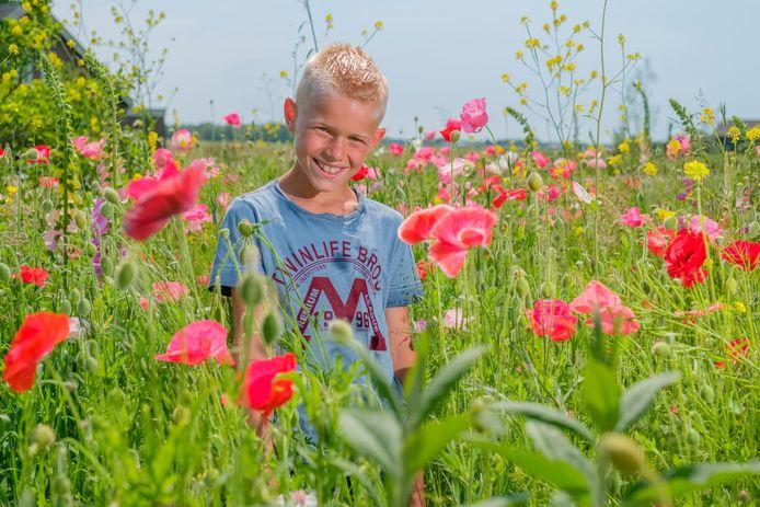 Joel (9) staat tot zijn schouders tussen de klaprozen in Waverveen.