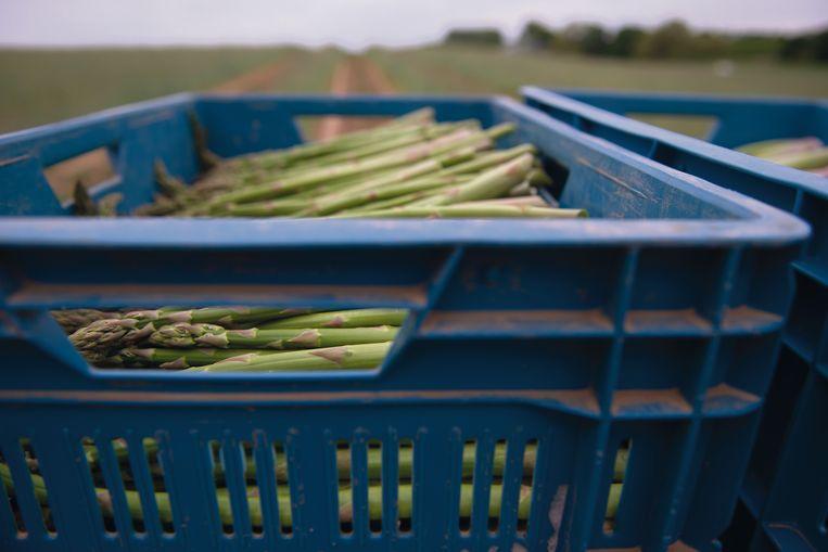 De biologische groene asperges van Regalys uit Gingelom in Haspengouw.  Beeld Tony Le Duc