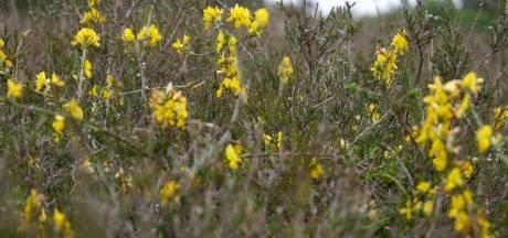 Zeldzame planten ontdekt in Herperduin bij Oss
