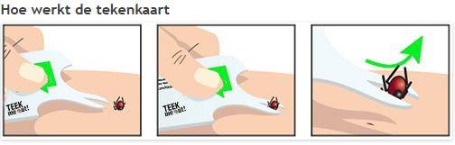 Als het bekje tussen huid en teek is geschoven kan de parasiet er zo worden uitgewipt.