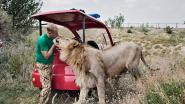 Wanhopige directeur van Europa's grootste dierenpark op de Krim wil dertig beren afschieten