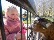 Kinderboerderij Bospark in Alphen blijft écht open