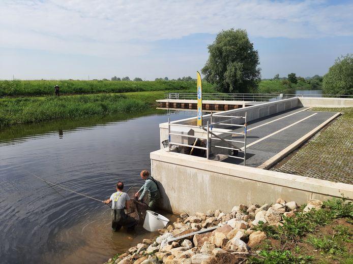 De vispassage bij het gemaal Kandia in Groessen.