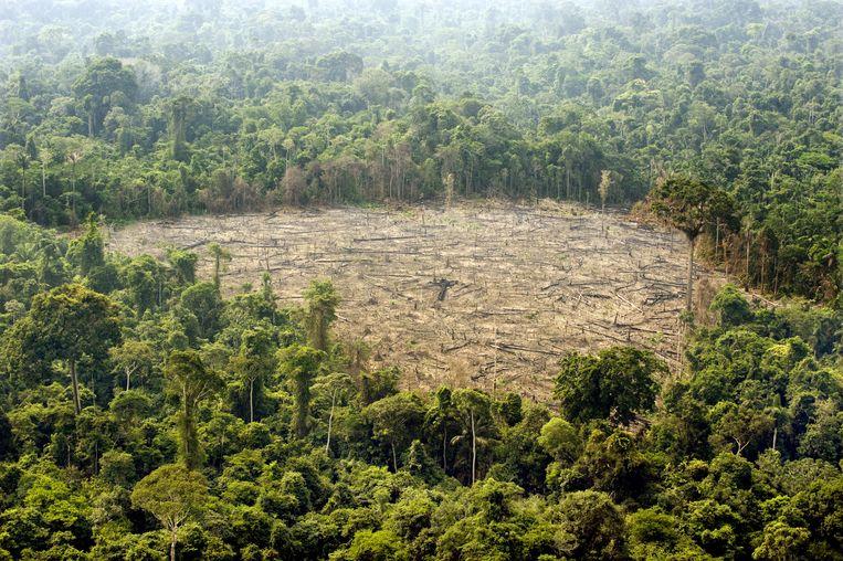 Een stuk van het Amazonewoud in het noorden van Brazilië. Beeld AFP