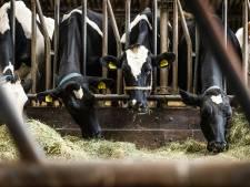 Nieuwe veestallen verder onder druk: rechtbank vernietigt 17 vergunningen