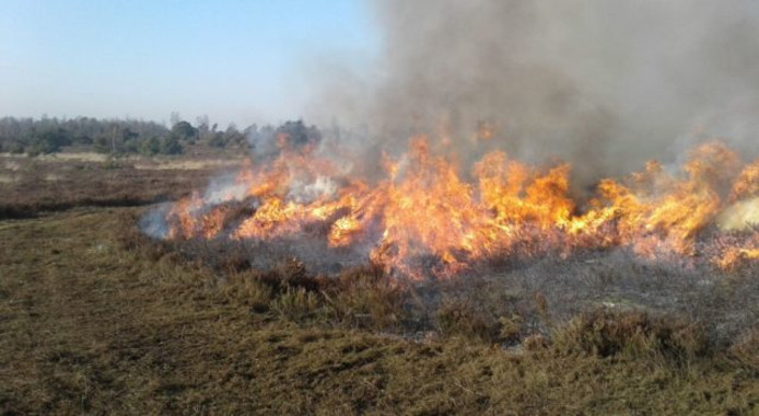 Beeld van heide die gecontroleerd wordt afgebrand. Foto ter illustratie.