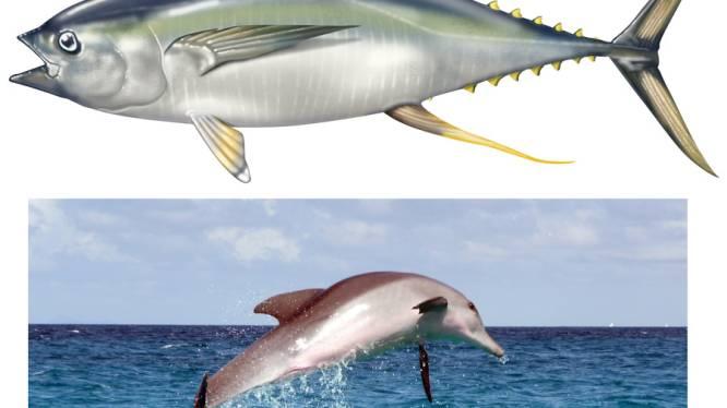 Dolfijn aangetroffen in blikken tonijn in Nederland