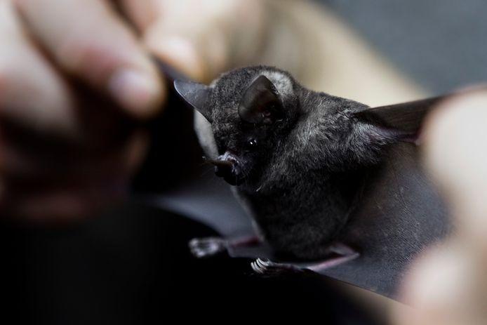 Foto ter illustratie. In de groep Vleermuizen delen leden informatie en advies over het beestje.