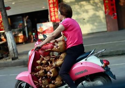 Een vrouw vervoert meer dan tien honden op haar scooter om later te verkopen op de markt.
