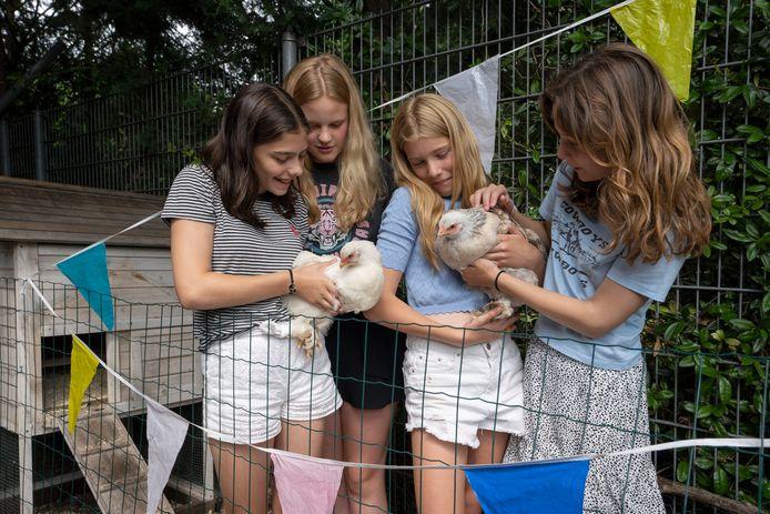 Jasmijn, Julia, Juultje en Pip (vlnr) zijn de initiatiefnemers van het kippenhok waar Toet en Nous wonen op basisschool de Piramide in  Vught.