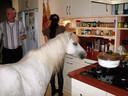 Deze pony neemt een kijkje in de keuken van een woning elders in het land.