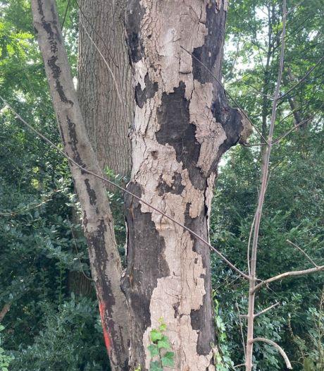 Gevaarlijke schimmel op bomen: waarschuwing in bos wegens risico op ontsteking longblaasjes