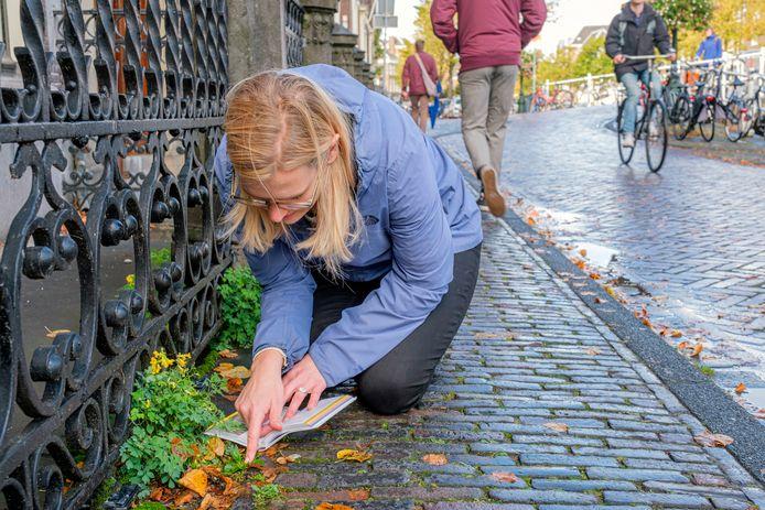 Nienke Beets onderzoekt stoepplantjes in het centrum van Leiden.