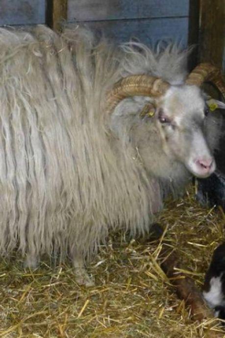 Minderjarige jongens opgepakt die dieren in Griftpark lastigvielen (door op hun rug te gaan zitten)