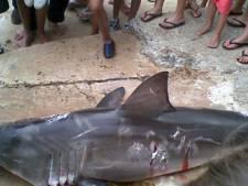 Australiër fors beboet voor doden witte haai