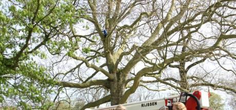 Boomklimmer (11) door brandweer uit boom getakeld in Rijssen