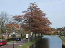 'Blote billen' in Schipluiden: Negen resterende elzen aan Dorpsstraat moeten weg