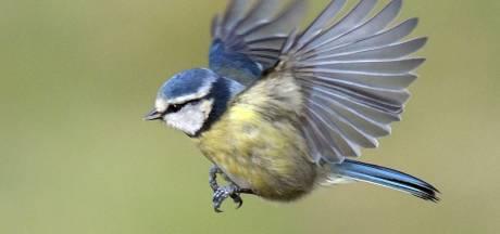 Huismus en koolmees vaakst gespot in Brabant tijdens Nationale Tuinvogeltelling