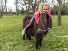 Pony opent hek en loopt 's nachts kilometers over dijken terug naar oude woonplek in Heinkenszand