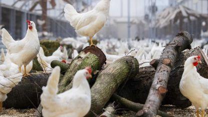West-Vlaanderen blijft dé landbouwprovincie